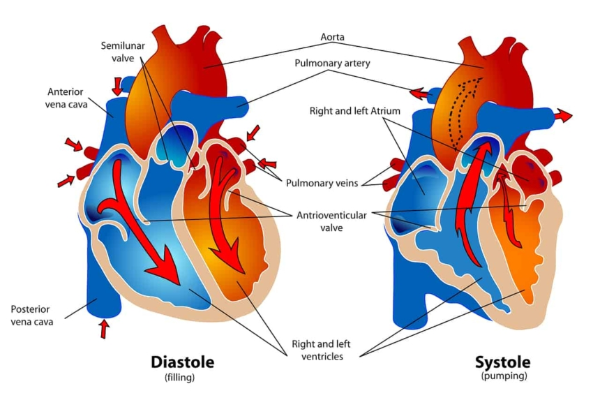 Cardiovascular-system-Complete-story-of-the-heart-blood-circulation